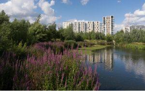 Here East wetlands
