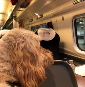 Loius dog on the train