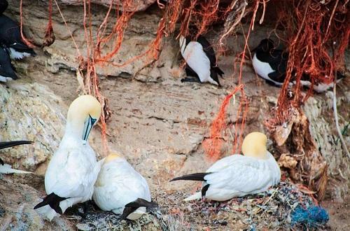 Plastic Waste Wildlife